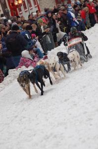 Dog sledding in Quebec City.