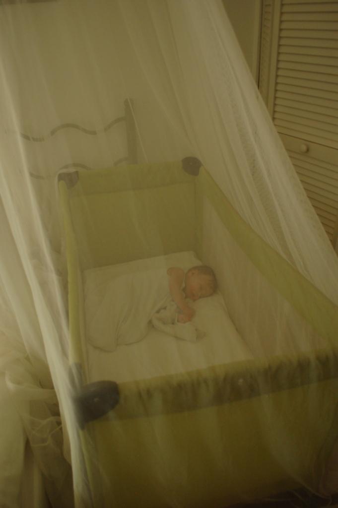 Baby Bug Free Zone